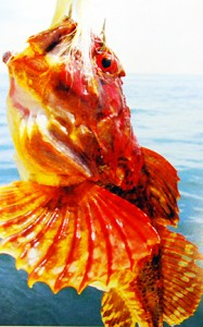 Exposure magazine features Ross Heinemann's '09 vibrant sea robin.