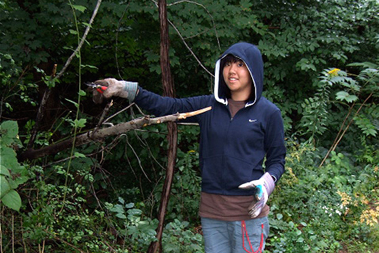 Linda Kung '12 helps clean up invasive species at Ravine Park, an 8.8 acre area located between Pine Street and High Street near campus. The park features a creek-side trail used regularly by Wesleyan students. Volunteers help maintain the trail by removing litter and invasive plants.