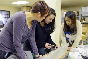 Sarah Croucher, Amy Cao and Chelsey Cho examine small glass test tubes and syringes discovered at the Beman site.