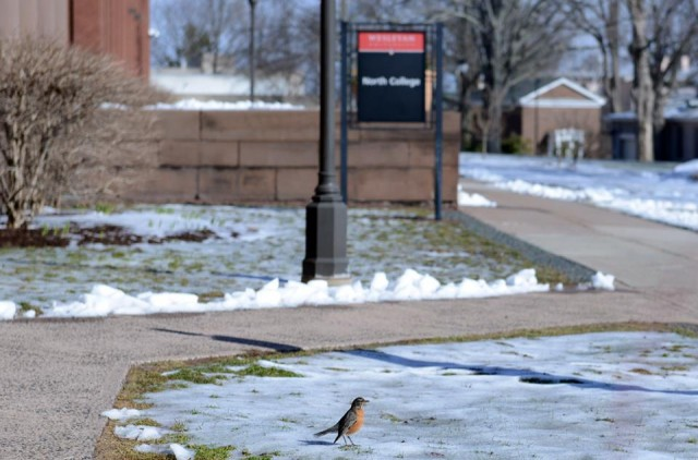 Even with snow on the ground, robins welcomed the spring season on March 20.