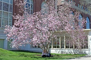 Hannah enjoys studying under Olin Library's magnolia tree.