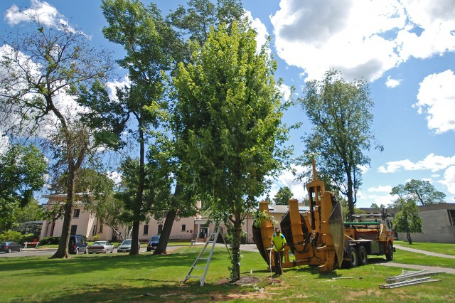 Crews used a mechanical tree spade to transplant a 20-year-old maple tree on Aug. 6.