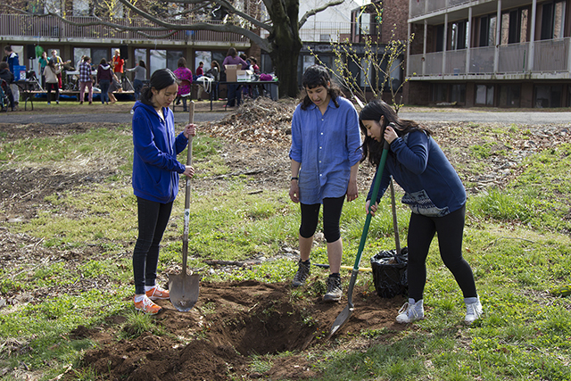 Working for Intelligent Landscape Design at Wesleyan (WILD Wes) hosted several tree plantings throughout Earth Month.