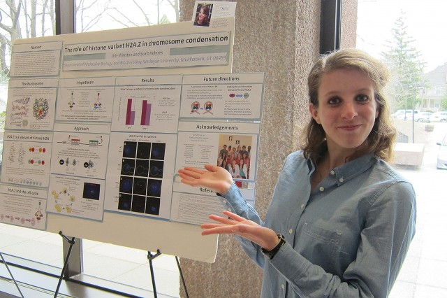 "Lisle Winston '14 presented her study, ""The Role of Histone Variant H2A.Z in Chromosome Condensation."" Her advisor was Scott Holmes, professor of molecular biology and biochemistry."