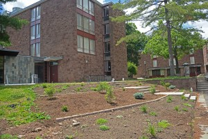 The student organization WILD Wes is working on a permaculture project at the Butterfield Courtyard near Summerfields.