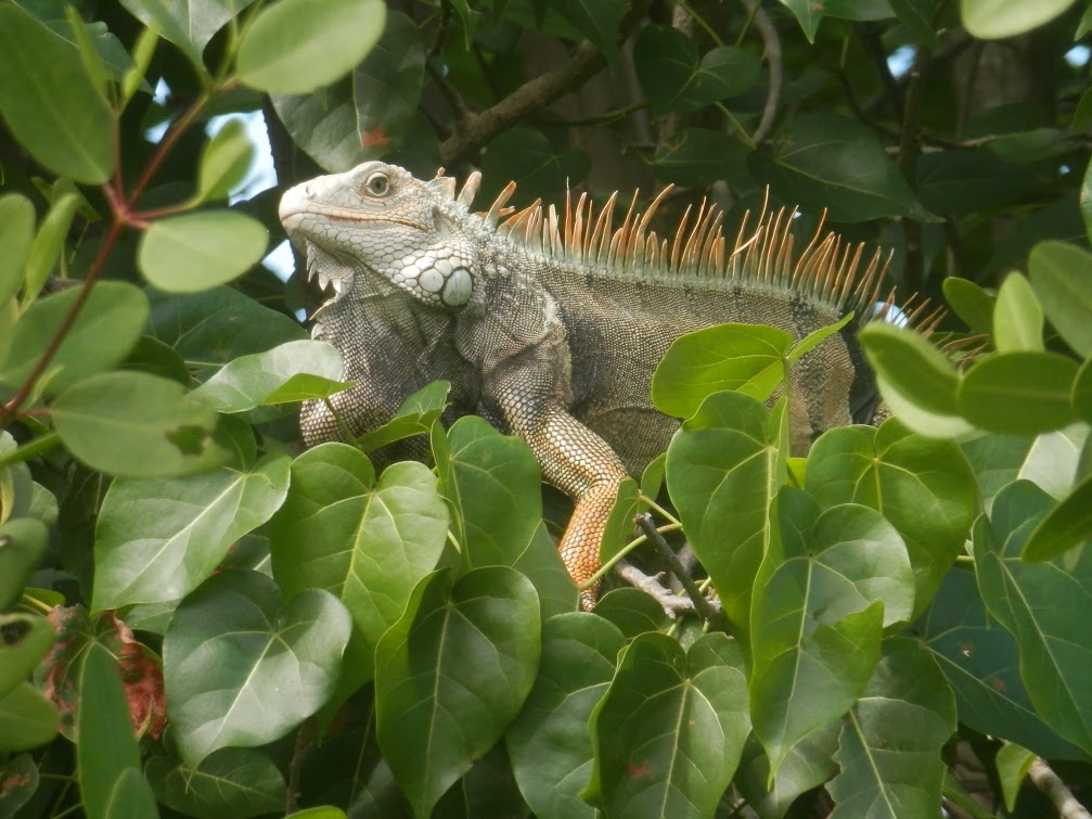 Some of the wildlife the group saw on its trip in Puerto Rico.