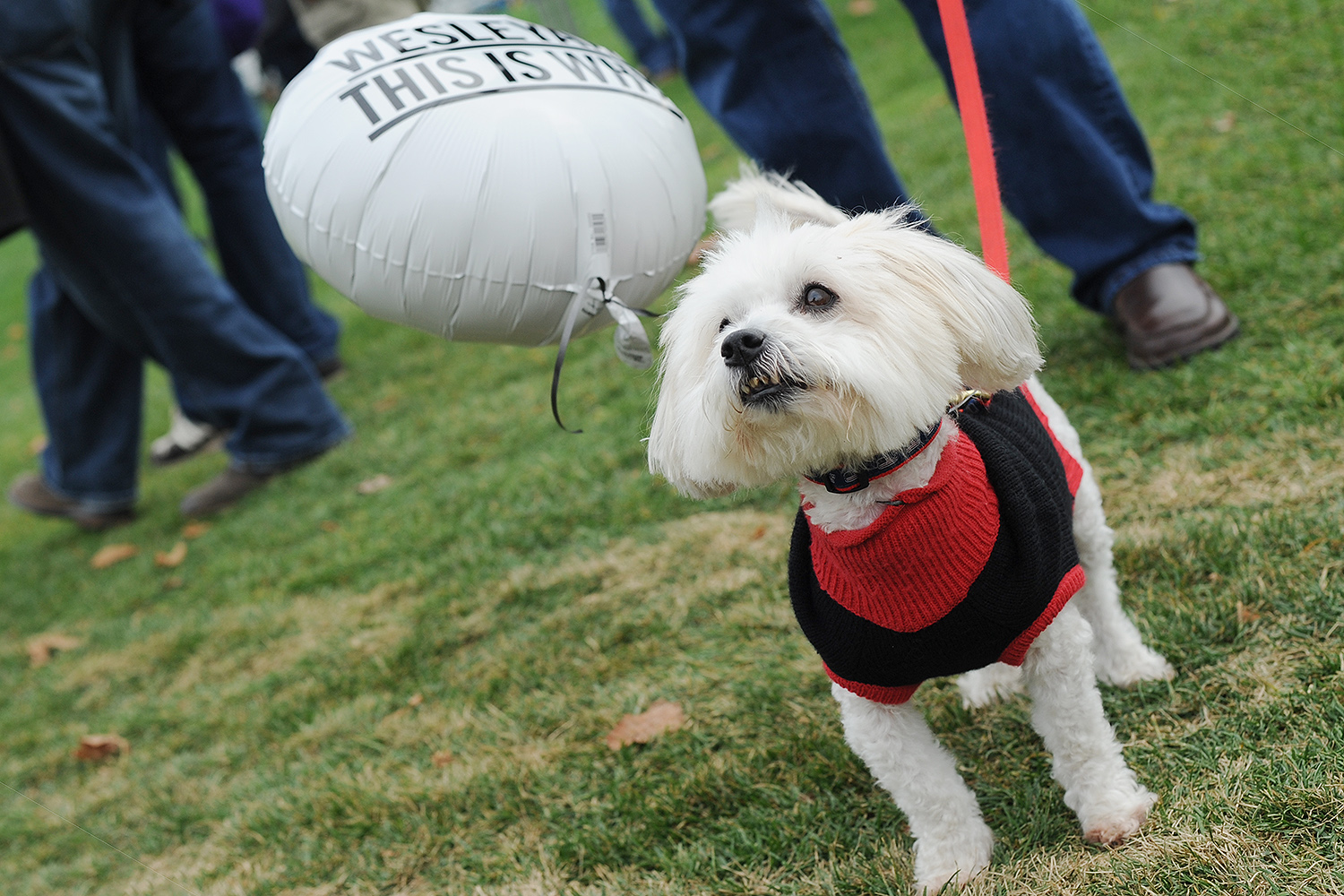 Dozens of furry friends also attended Homecoming/Family Weekend at Wesleyan. (Photo by Olivia Drake MALS '08)