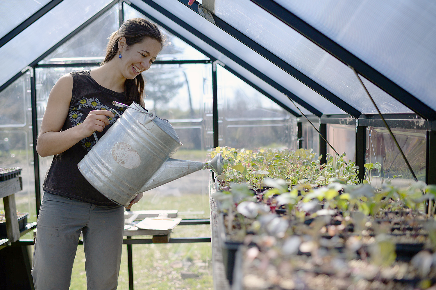 Hilary Brumberg '17 waters gypsy broccoli seedlings inside a new greenhouse at Long Lane Organic Farm on April 14. The greenhouse, funded by Wesleyan's Green Fund, allows the student farmers to grow plants earlier in the growing season. The seedlings will be transplanted into the farm once warm weather stabilizes. (Photo by Olivia Drake)