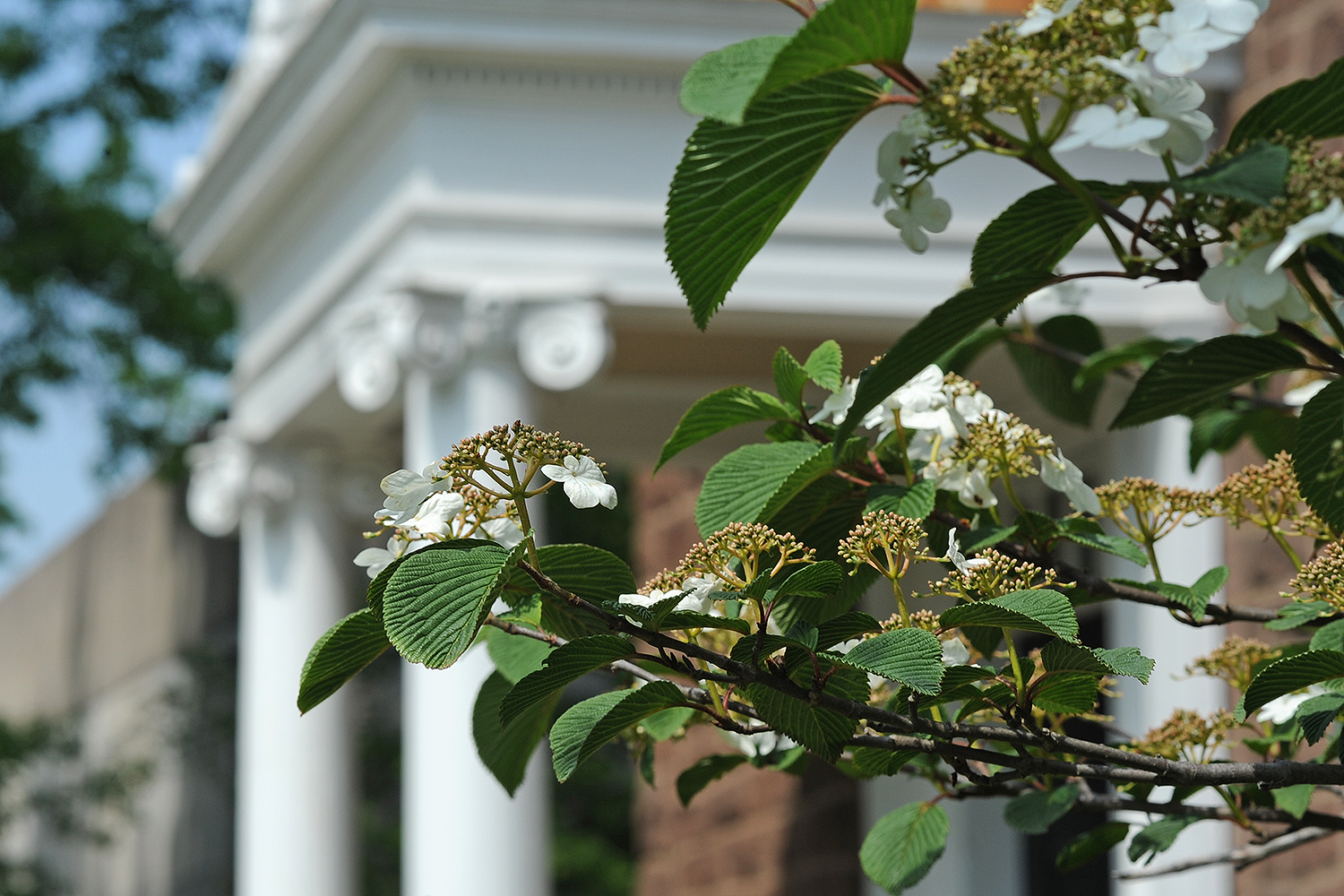 Wesleyan's campus is home to dozens of flowering shrubs, trees and blooming flower gardens.