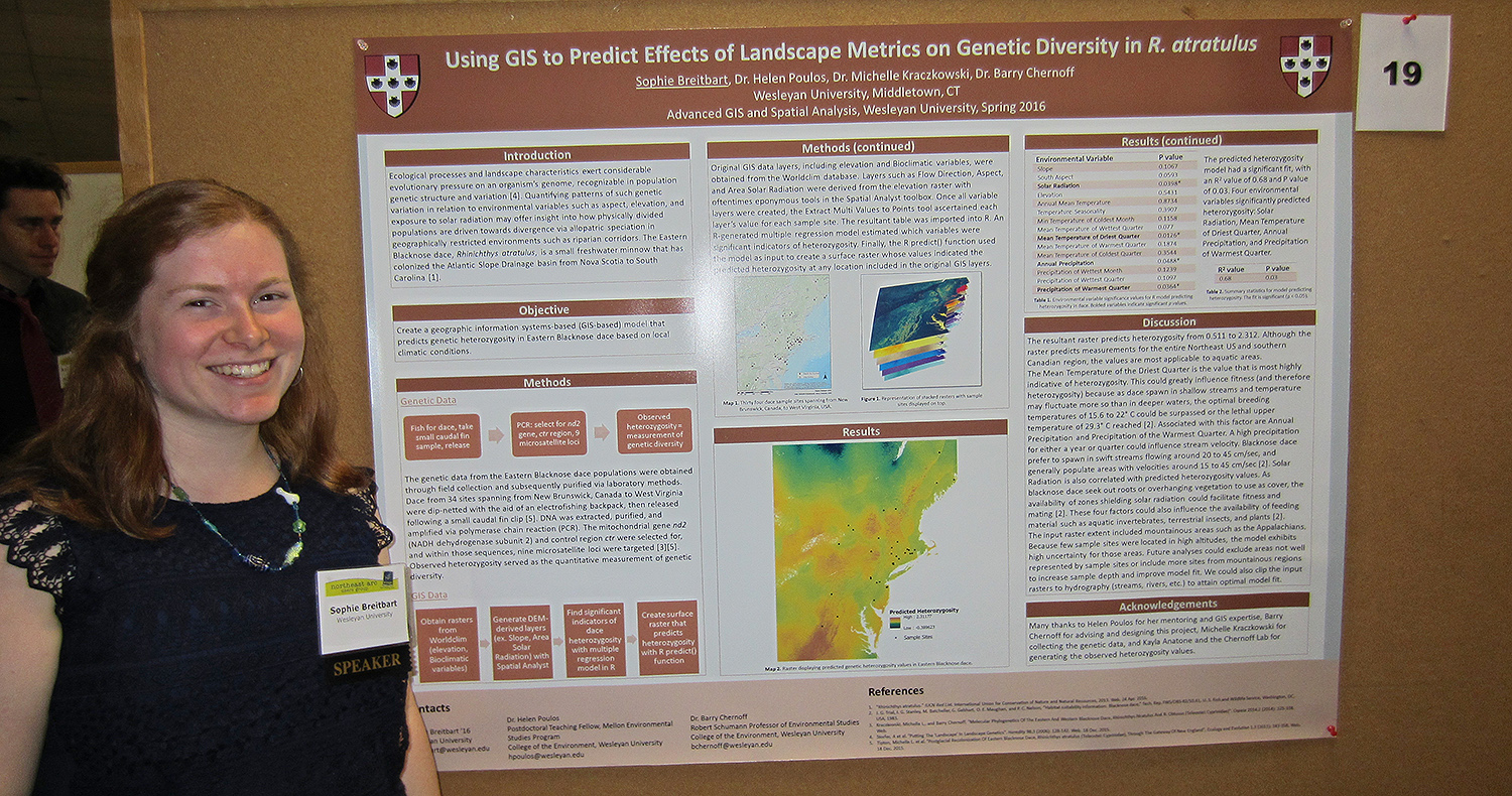 "Sophie Breitbart '16 presented her poster titled ""Using GIS to Predict Effects of Landscape Metrics on Genetic Diversity in R. Atratulus."" Breitbart's objective was to create a GIS-based model that predicts patterns of genetic variation for the Eastern Blacknose Dace, Rhinichthys atratulus, based on the presence of environmental factors such as land cover type and elevation."
