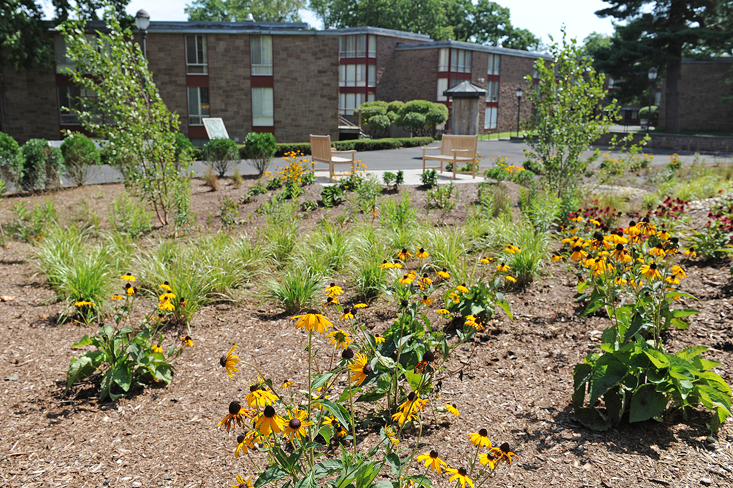 The Butterfield Colleges Residence Hall received a new garden this summer including native grasses, shrubs and yellow and purple cone flowers.