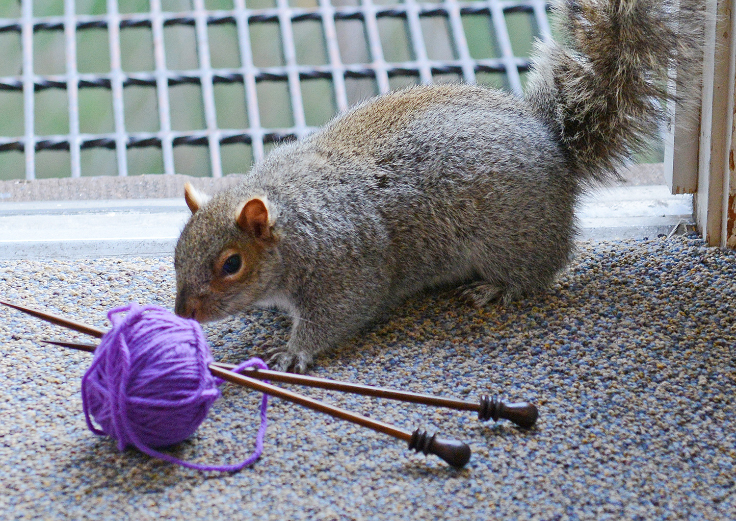 knitting with squirrels