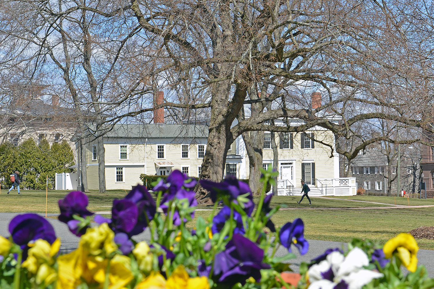 Pansies are planted in several containers on College Row.