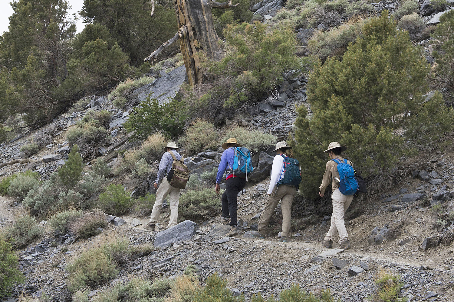The research team hiked to 9,600 feet to sample rhizospheres of prickly pear and sagebrush.