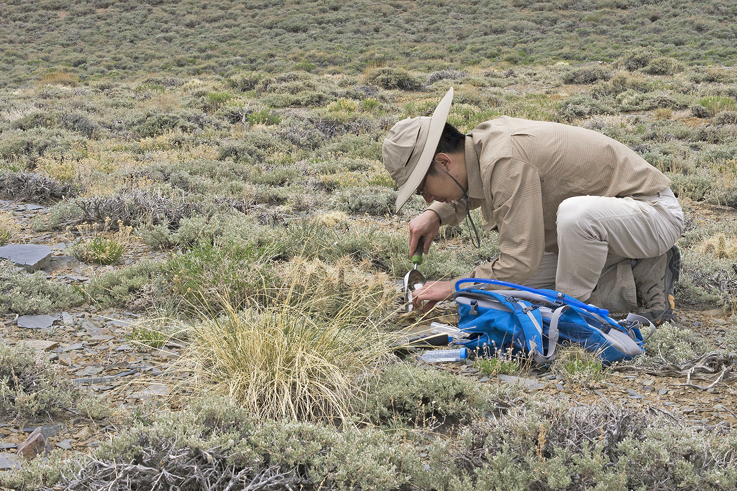 Graduate student Jerry Lee samples a prickly pear cactus rhizosphere at about 6,000 feet above sea level.