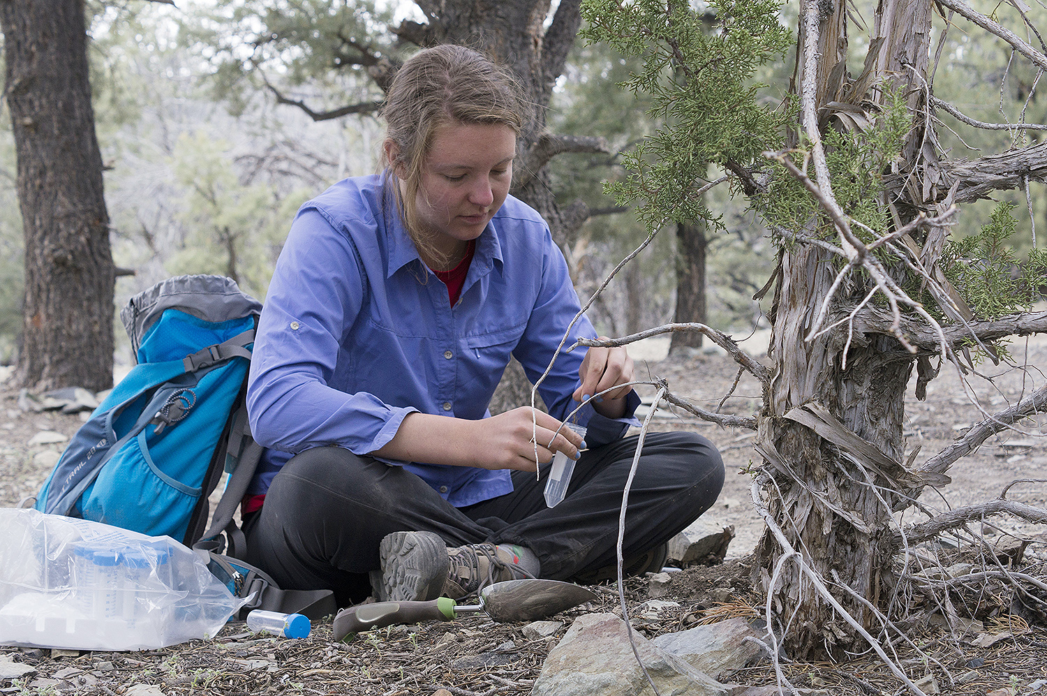 Bella Wiener '19 samples the rhizospheres of a juniper tree at about 7,000 feet above sea level.