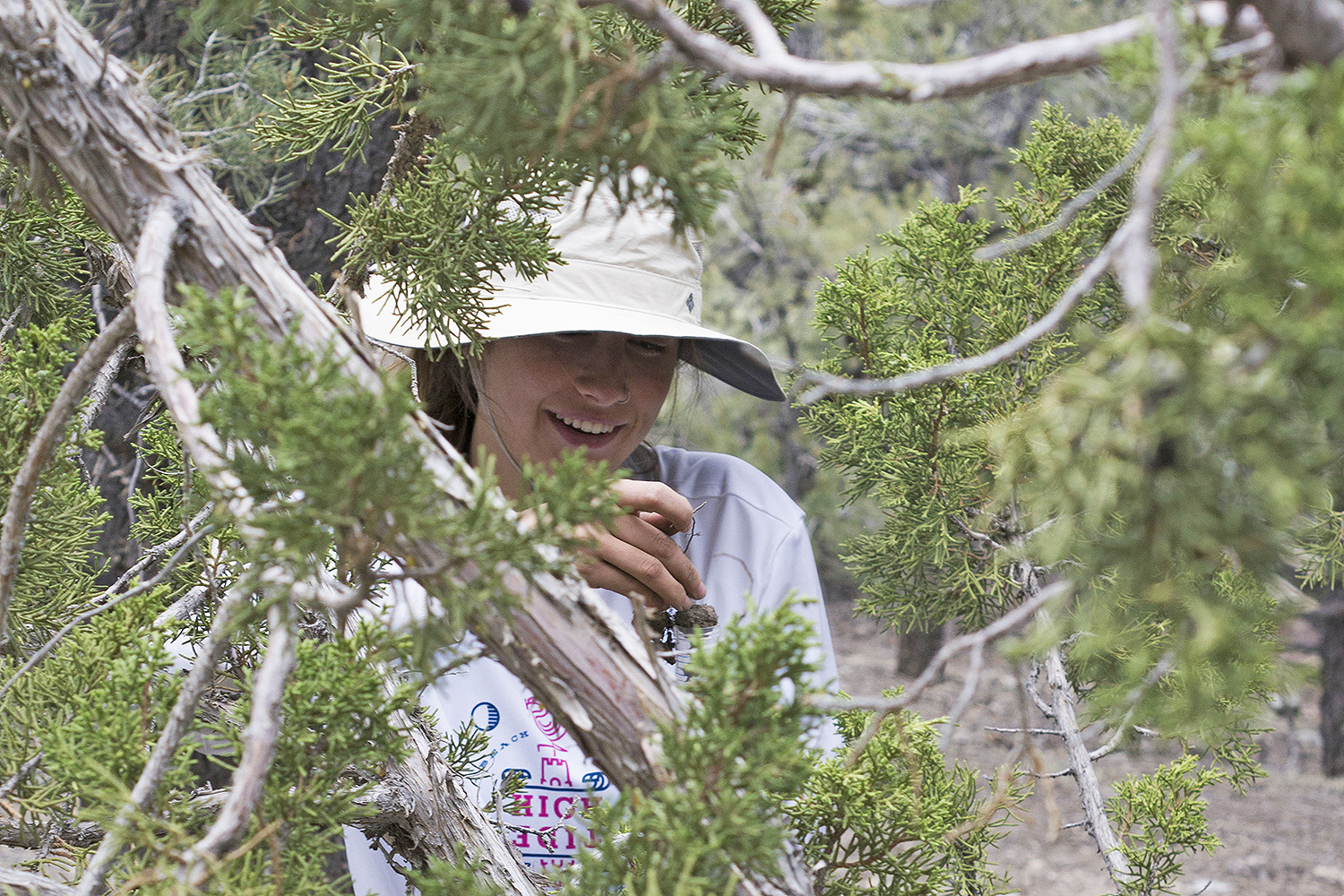 Nicole DelGaudio '18 samples the rhizospheres of a juniper tree at about 7,000 feet above sea level.