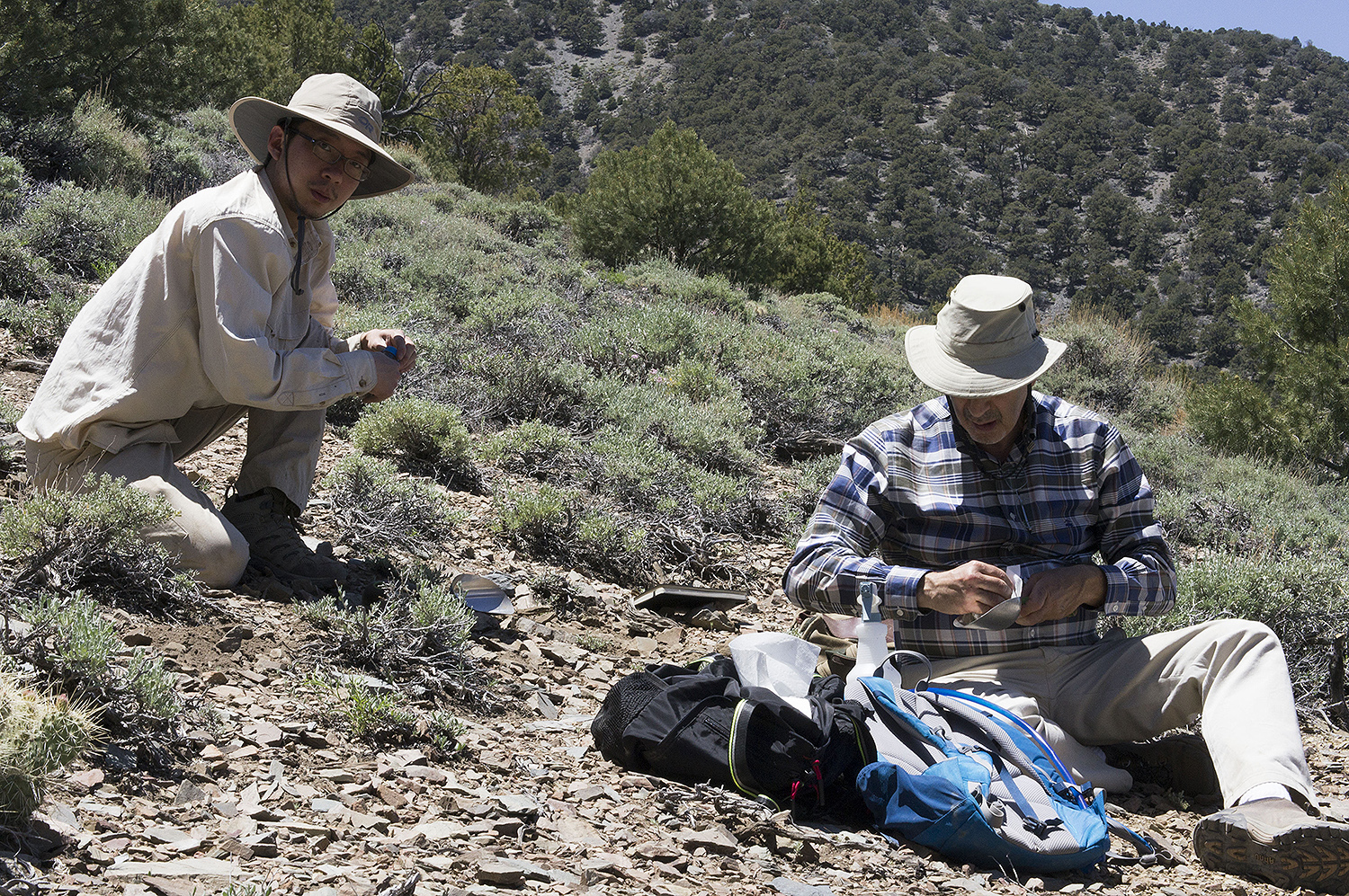 Jerry Lee and Fred Cohan gather samples of sagebrush.
