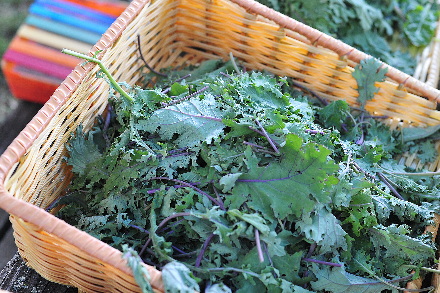Vegetables include chard, kale, cabbage, collards, turnips, radishes, scapes, spinach, herbs, arugula flowers, dandelion jelly and more.