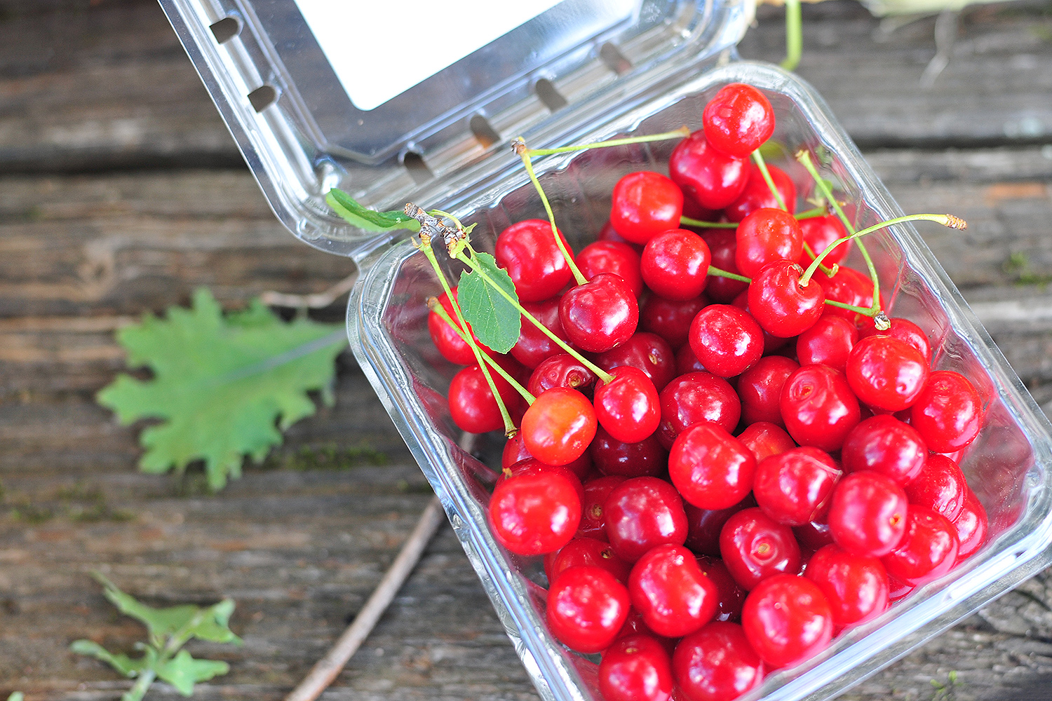 The farm's sole cherry tree produced a few handfuls of berries for the June 27 market.