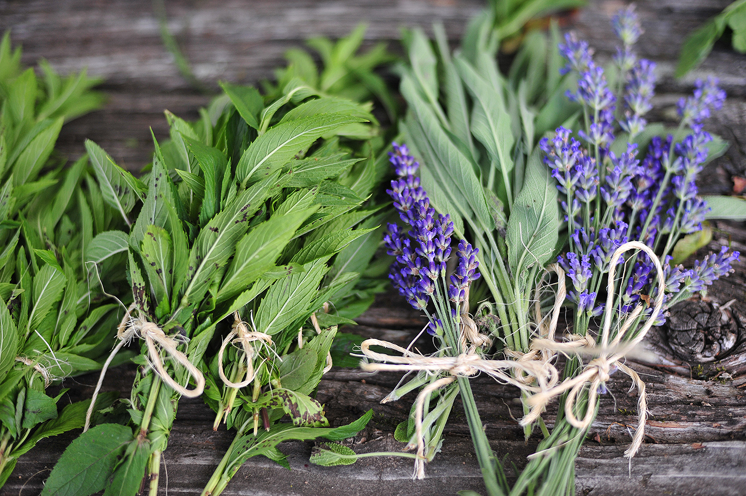 Mint, sage and lavender also are grown at the farm and sold at the market.