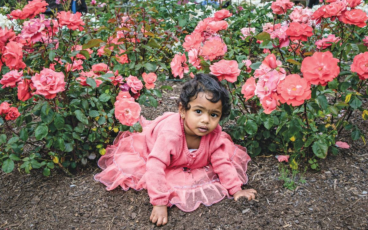 "Special Award for Collection | ""Amidst the bustle and activity of the Parnell Festival of Roses sat this beautiful child, observing in wonder the aromatic flowers around her. As I passed by, this extraordinary scene caught my eye. A proud mother, clearly excited to share her daughters radiance invited, ""would you like to take a picture?"" Surprised, and rather honored, I accepted. In that moment I could hardly believe how much she resembled a young beautiful rose. I remember wondering if the young girl imagined that she was a flower herself."" (Submitted by: Ari Markowitz '17)"