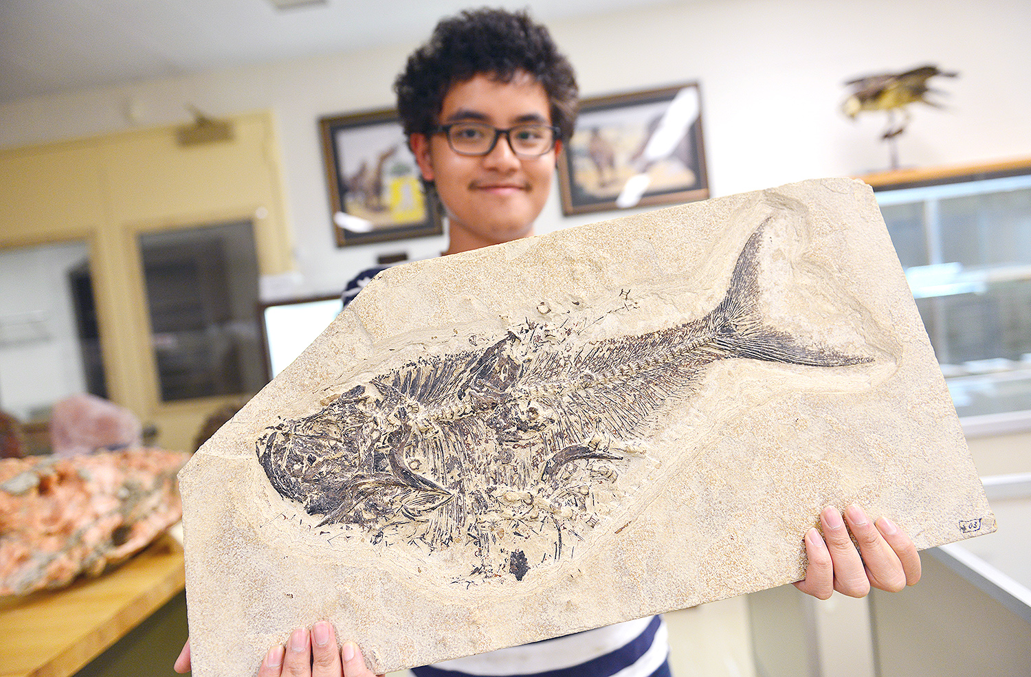 Sanjirat Palakarn '20 displays a fossil of Diplomystus dentatus from the Eocene Period. The fossil was discovered in what is now Wyoming. Diplomystus is an extinct freshwater fish distantly related to herrings and sardines.