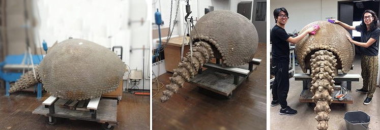 After repairs were made to the Glyptodon's internal structure, students cleaned and painted the cast.