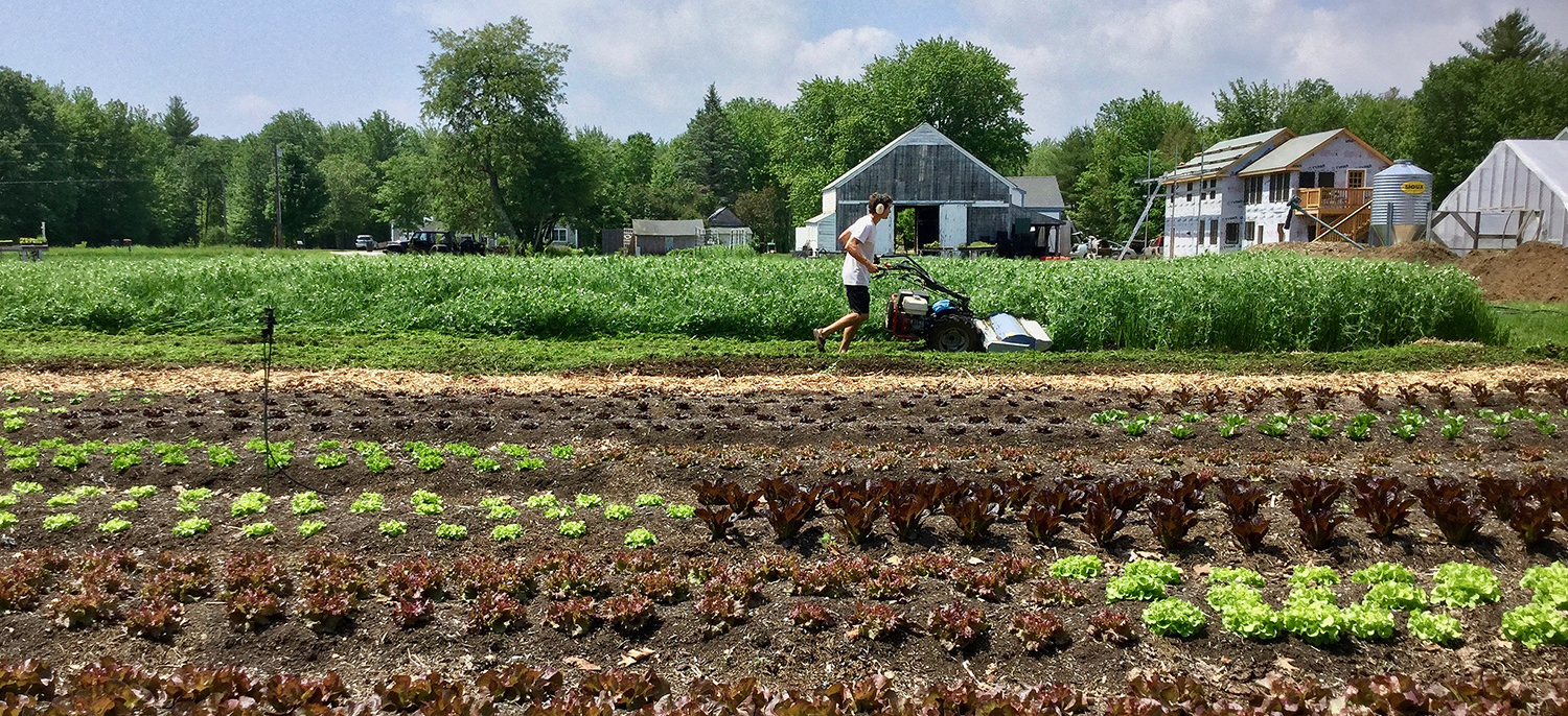 Daniel Mays '06 owns and operates a 14-acre farm in Scarborough, Maine.