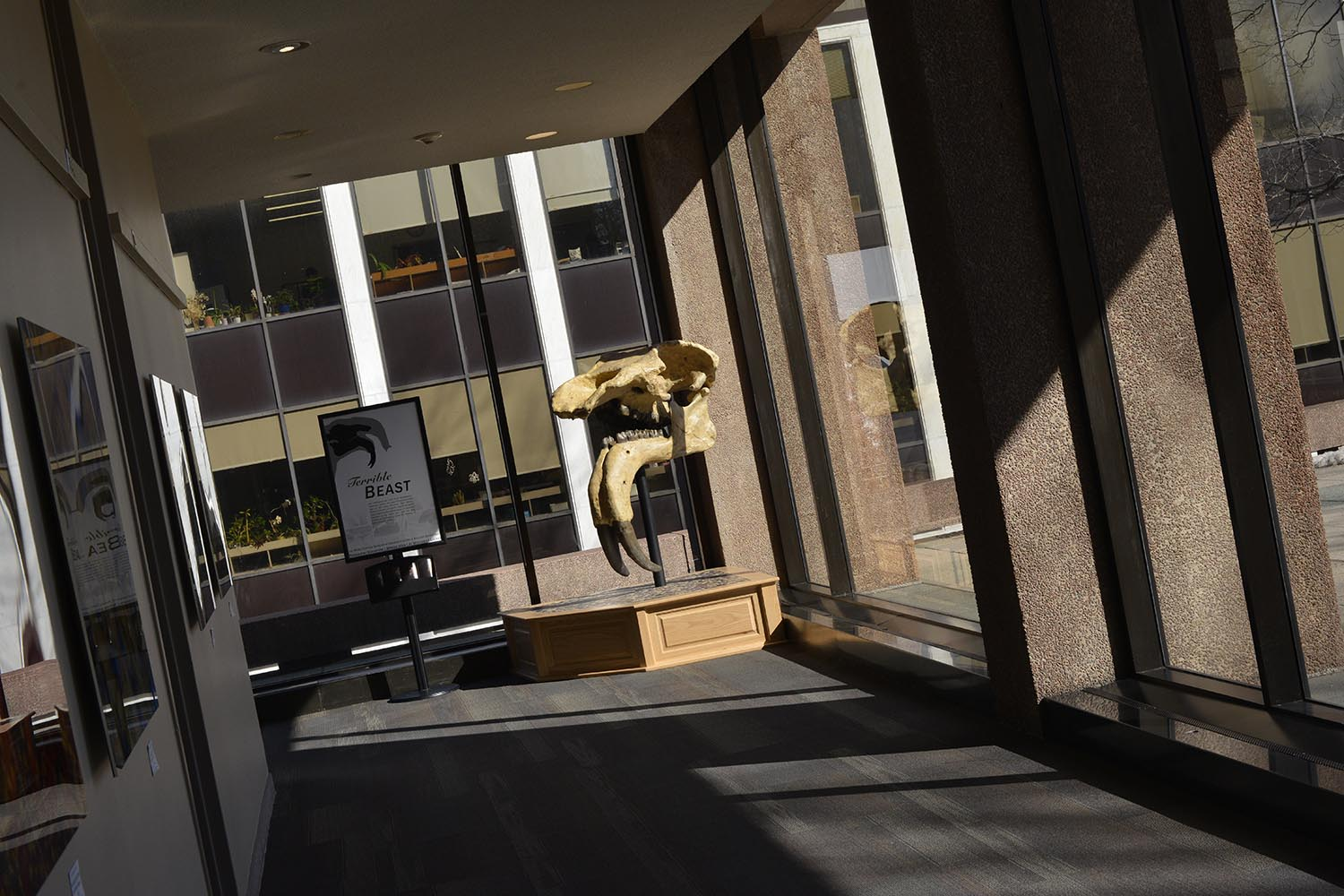 Exley Science Center is now home to its second prehistoric specimen—a massive land animal known as aDeinotheriumgiganteum. This elephant-lookalike would have weighed up to 20,000 pounds and would use their massive tusks forstripping bark from tree trunks for eating and for dominating fellow males during mating season.