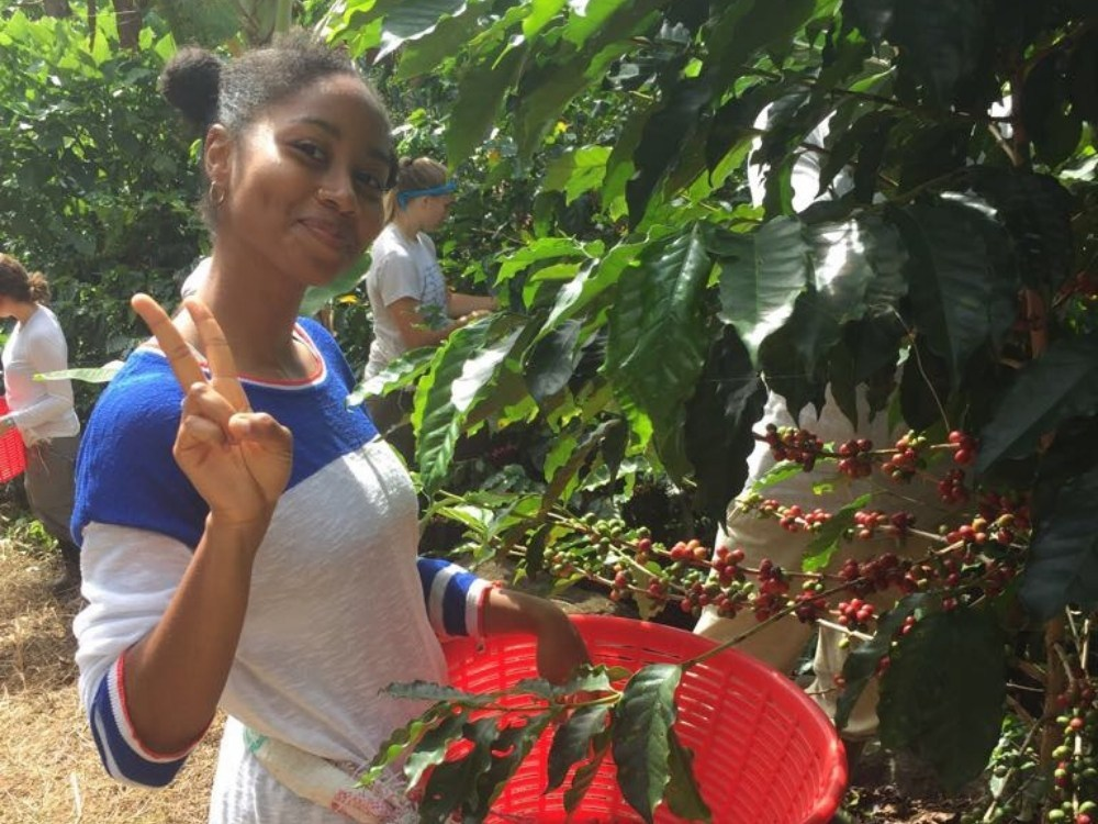 Beaumont '19 picking coffee at a coffee farm in Costa Rica during a semester abroad.