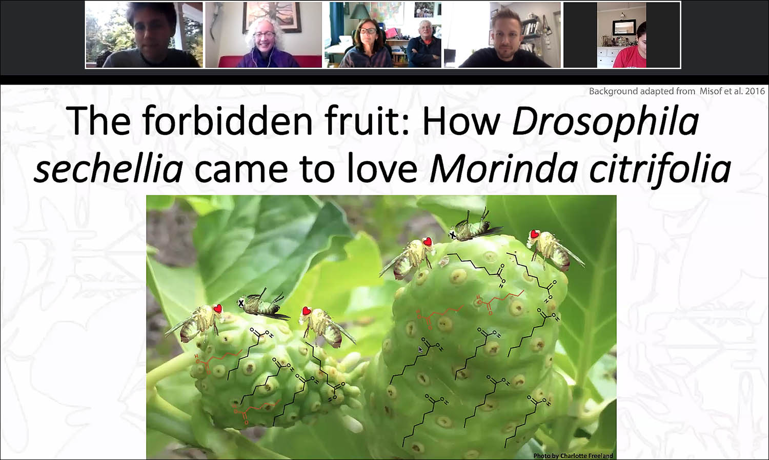 "Zachary Drum, a PhD candidate in biology, delivered the first 2020-21 Graduate Speaker Series talk on Oct. 2 through Zoom. Titled ""The Forbidden Fruit: How Drosophila sechellia came to Love Morinda citrifolia,"" Drum's research explores how a fruit fly species in Africa is able to eat a poisonous fruit that flies in the the rest of the world would find toxic."