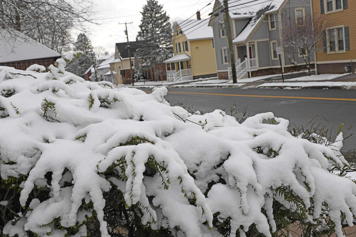 Snow covers an evergreen hedge on Pine Street near several wood-frame student houses.