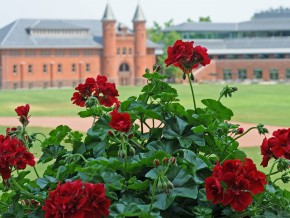 Red geraniums bloom behind Olin Library and face Fayerweather Hall and Usdan University Center.